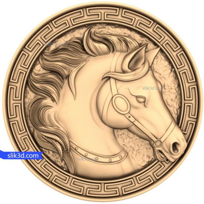 Pferd (17)